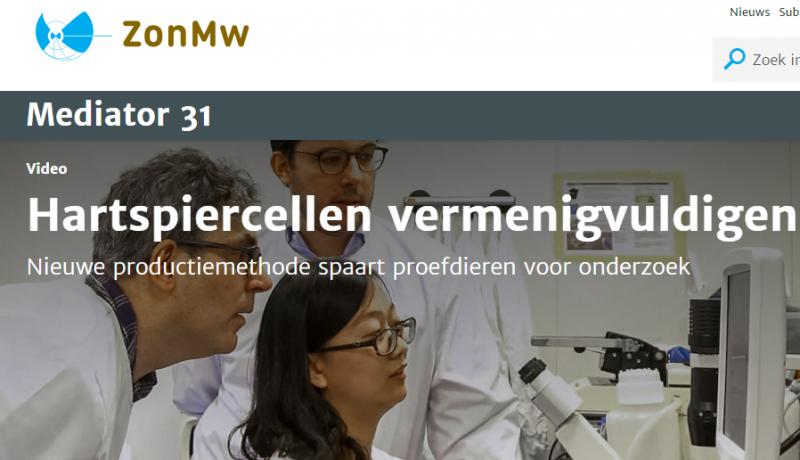 Twan de Vries gives interview for ZonMw's Mediator Magazine about conditionally immortalized cardiomyocytes